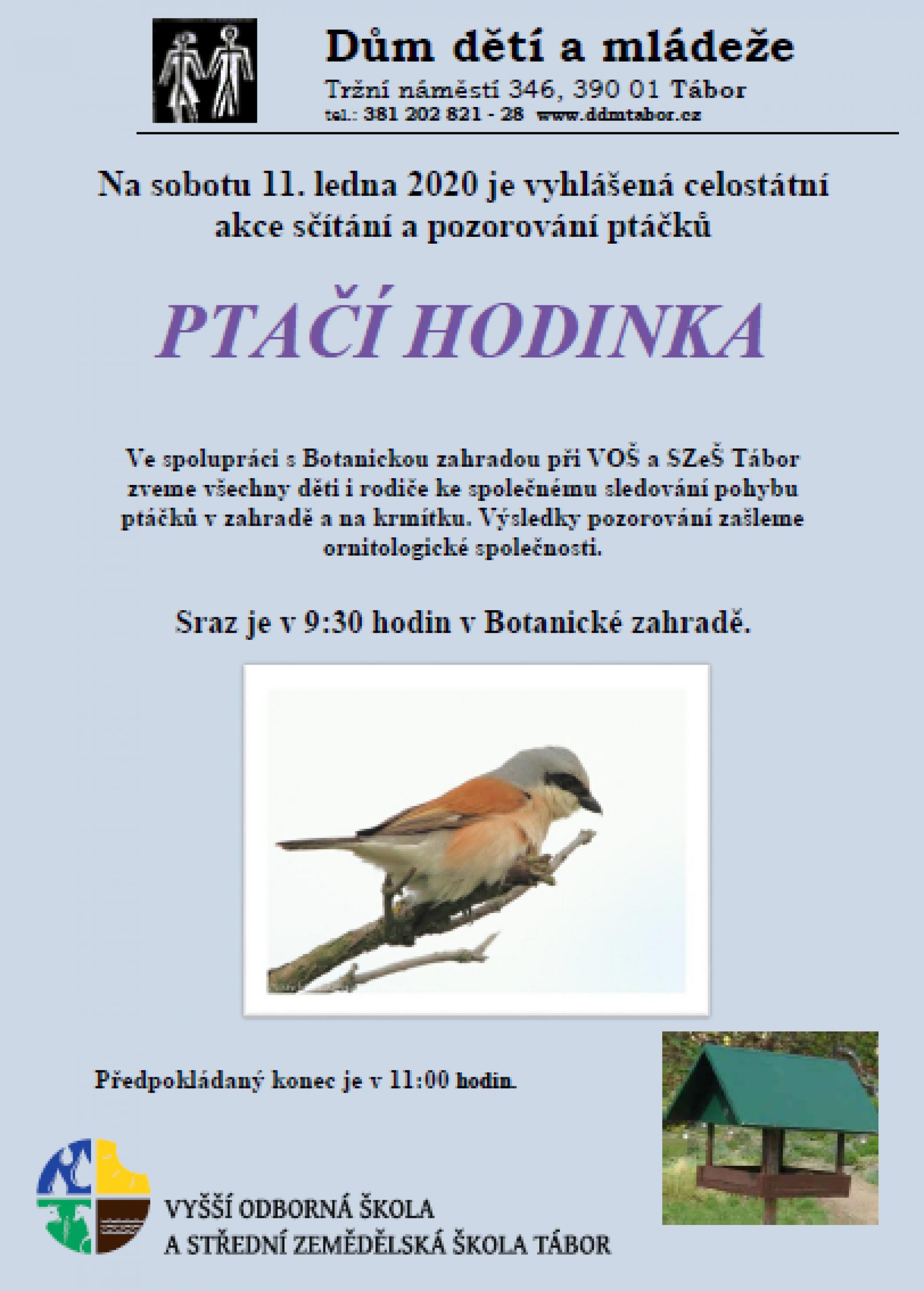 Ptaččí hodinka_obrázek.png